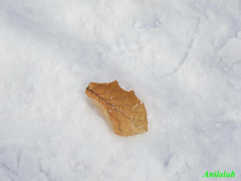 liść i snieg